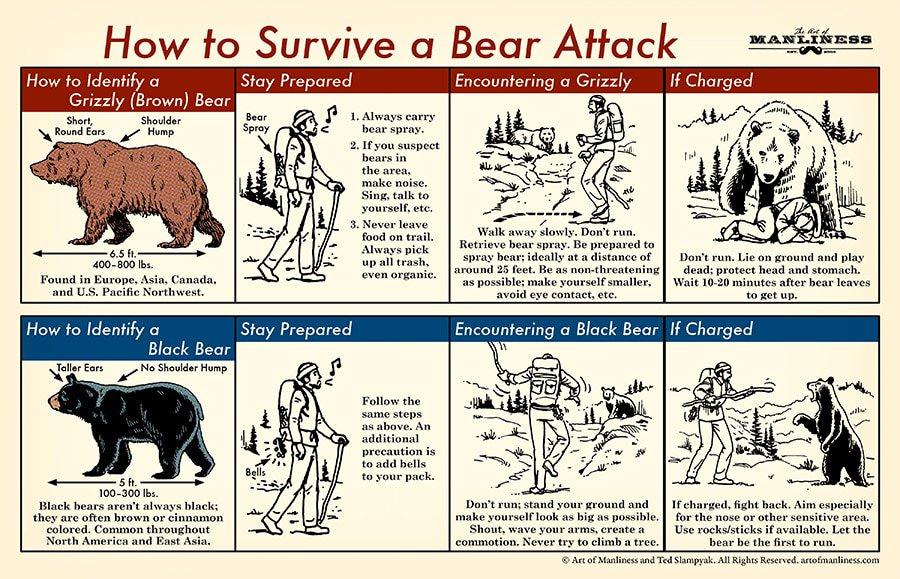 Bear-Attack-2